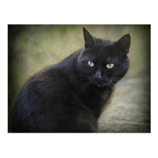 Black male cat with green eyes postcard