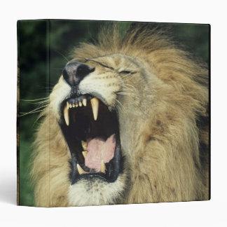 Black-maned male African lion yawning Vinyl Binders