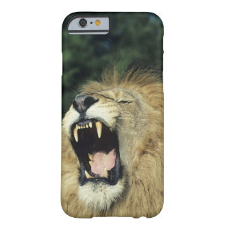 Black-maned male African lion yawning, headshot, Barely There iPhone 6 Case