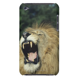 Black-maned male African lion yawning, headshot, Barely There iPod Cases