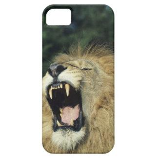 Black-maned male African lion yawning, headshot, iPhone 5 Cover