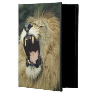 Black-maned male African lion yawning iPad Air Cover