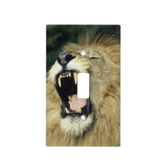 Black-maned male African lion yawning Light Switch Covers