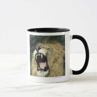 Black-maned male African lion yawning Mug