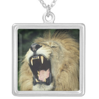 Black-maned male African lion yawning Square Pendant Necklace