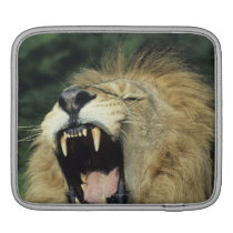 Black-maned male African lion yawning Sleeve For iPads
