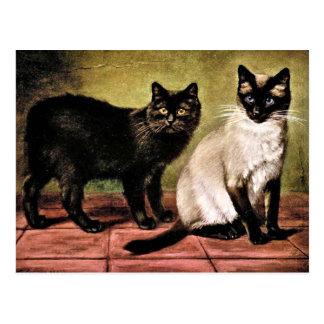 Black Mank and Royal Siamese Cat Postcard