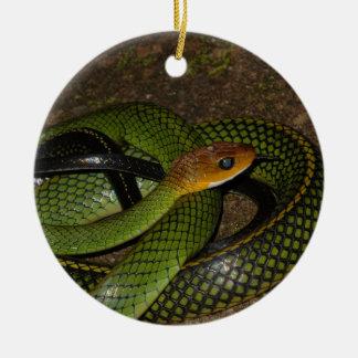 Black-margined Ratsnake or Green rat snake Ceramic Ornament