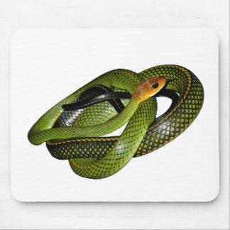 Black-margined Ratsnake or Green rat snake Mouse Pad
