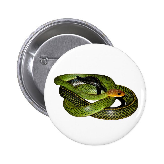 Black-margined Ratsnake or Green rat snake