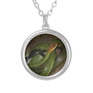 Black-margined Ratsnake or Green rat snake Silver Plated Necklace