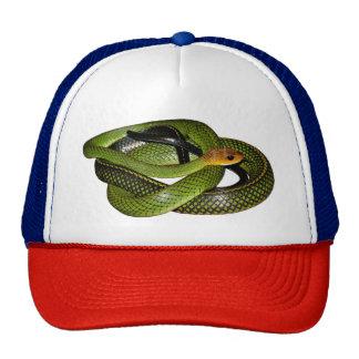 Black-margined Ratsnake or Green rat snake Trucker Hat