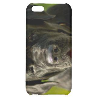 Black Mastiff iPhone 4 Case