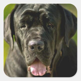 Black Mastiff Stickers