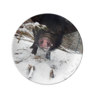 Black Meishan Mix Mini Pig In SNow Porcelain Plate