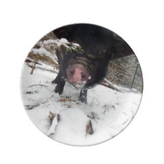 Black Meishan Mix Mini Pig In SNow Porcelain Plate