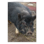 Black miniature pig 43a cards