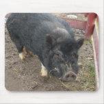 Black miniature pig 43a mouse pads