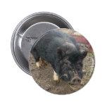 Black miniature pig 43a pins