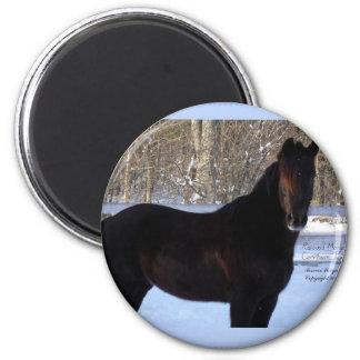 Black Morgan horse in snow 2 Inch Round Magnet