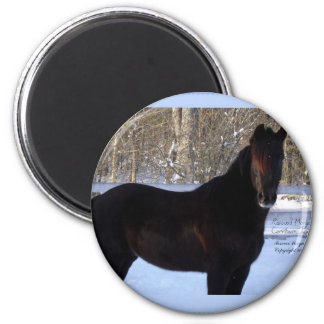 Black Morgan horse in snow Magnet