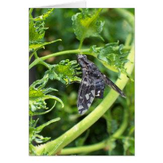 Black Moth 4111 - Vertical Card