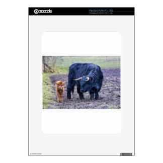 Black mother scottish highlander cow iPad skin