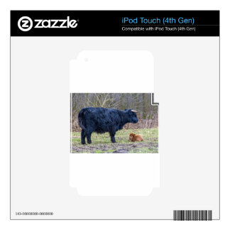 Black mother scottish highlander cow with calf decal for iPod touch 4G