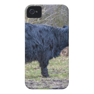 Black mother scottish highlander cow with calf iPhone 4 cover