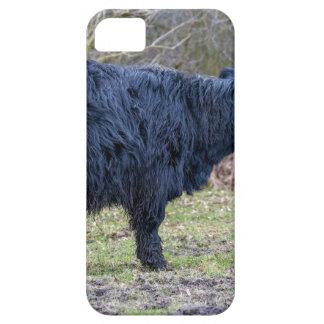 Black mother scottish highlander cow with calf iPhone SE/5/5s case