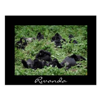 Black mountain gorilla group Rwanda postcard