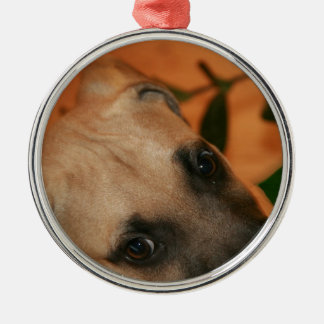 Black-mouth cur puppy metal ornament