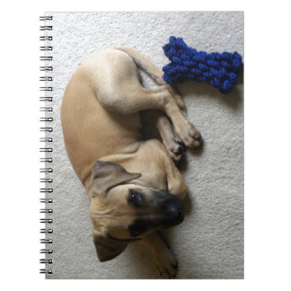 Black-mouth cur puppy with blue toy spiral note book