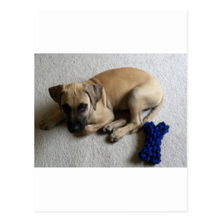 Black-mouth cur puppy with blue toy postcard