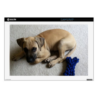 Black-mouth cur puppy with blue toy laptop decal