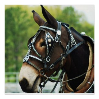black mule print