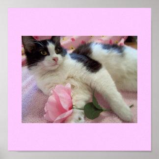 black n white cat Poster