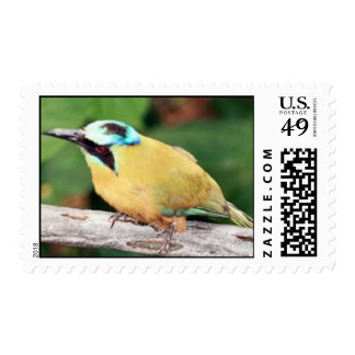 Black Napped Oriole Postage Stamps Postage Stamp