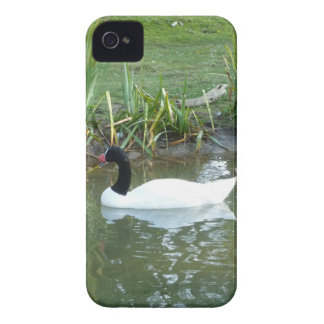 Black Neck Swan iPhone 4 Covers