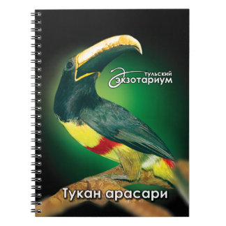 Black-necked aracari notebook