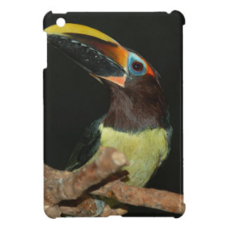 Black-necked aracari toucan iPad mini cases