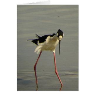 Black-necked Stilt 2 Card