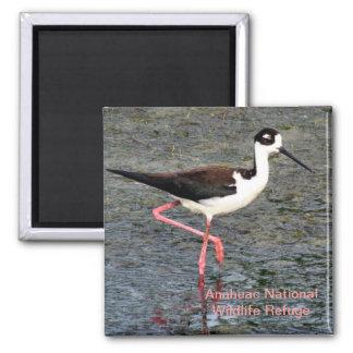 Black-Necked Stilt 2 Inch Square Magnet