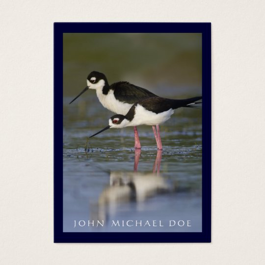 Black-necked Stilt Birder's Calling Card