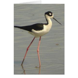 Black-necked Stilt Card