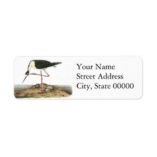 Black-Necked Stilt, John Audubon Custom Return Address Labels