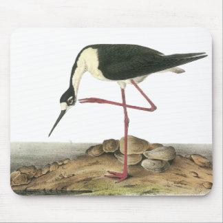 Black-Necked Stilt, John Audubon Mouse Pad