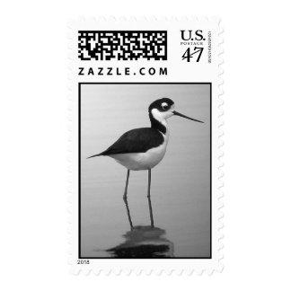 Black-necked Stilt Postage