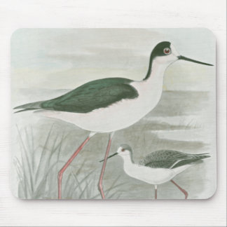 Black-Necked Stilts by the Water Mouse Pad