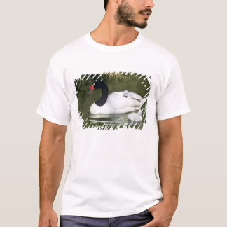Black-necked swan adult and cygnets in water. T-Shirt